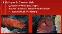 Evolutionary behavior