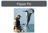 Spy dolphins